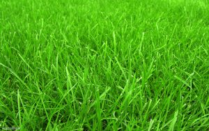 toprak düzenleyici, Organik gübre