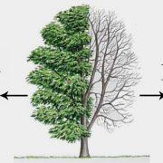 Hasta ağaç nasıl hayat bulur