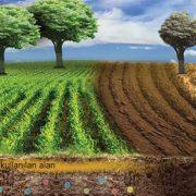 Kuruyan ağaç nasıl kurtarılır
