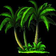 Palmiye gübreleme